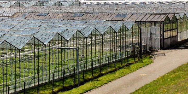Tuinders West-Brabant willen 100.000 ton CO2 per jaar besparen